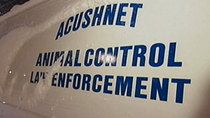 Police investigate dead, abused pit bull in Acushnet