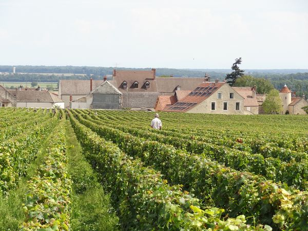The Extortion Plot That Shook France's Wine Country to Its Roots