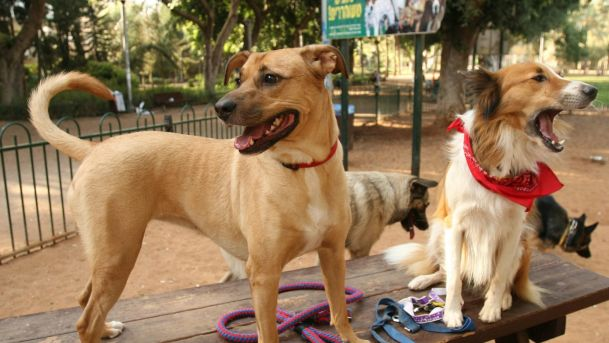 Only 17 Percent of Israel Police Probes Into Alleged Animal Cruelty End in …