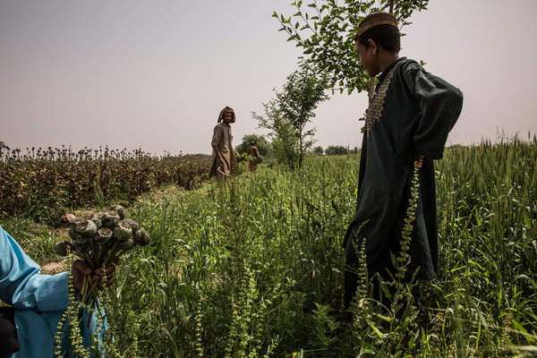 Corrupt Combatants Fight for Control of Lucrative Afghan Drug Trade